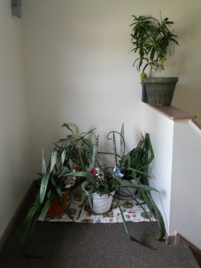 Plants on the landing