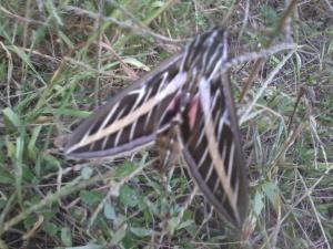 Strange flying beast